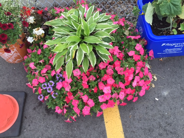 Get your Concrete Blooming