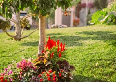 View More: http://samanthaerin.pass.us/quickgarden