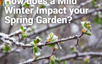 How does a Mild Winter Impact your Spring Garden?