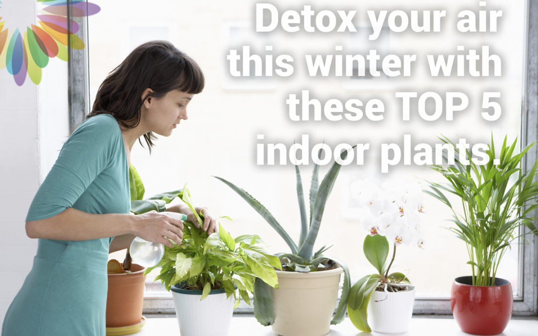 Detox your Air this Winter with These top Five Indoor plants.