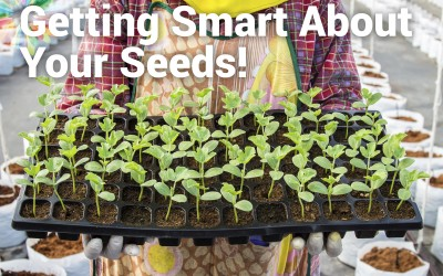 Setting the Groundwork for Seeds