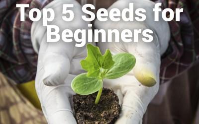 Top Five Seeds for the Beginner Gardener